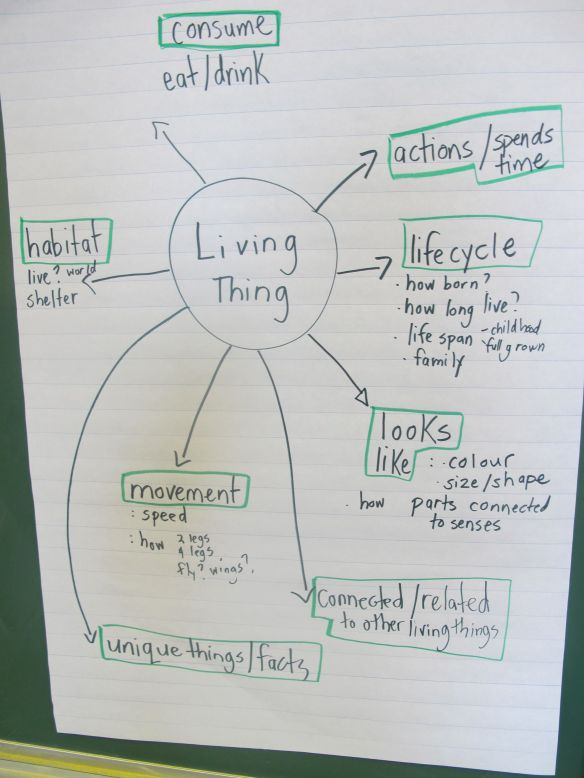 A chart we made together to help us determine what might be important when learning about a living thing