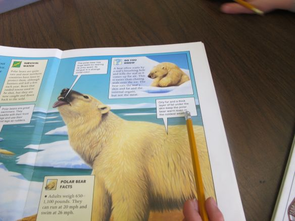 Look! Read here!  Deep Thinking Questions: Ice Bear There's a Book for That