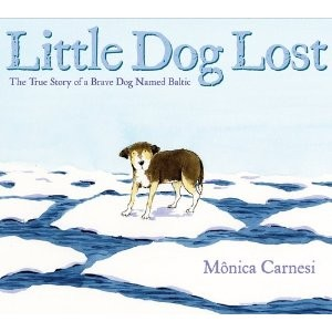 little-dog-lost