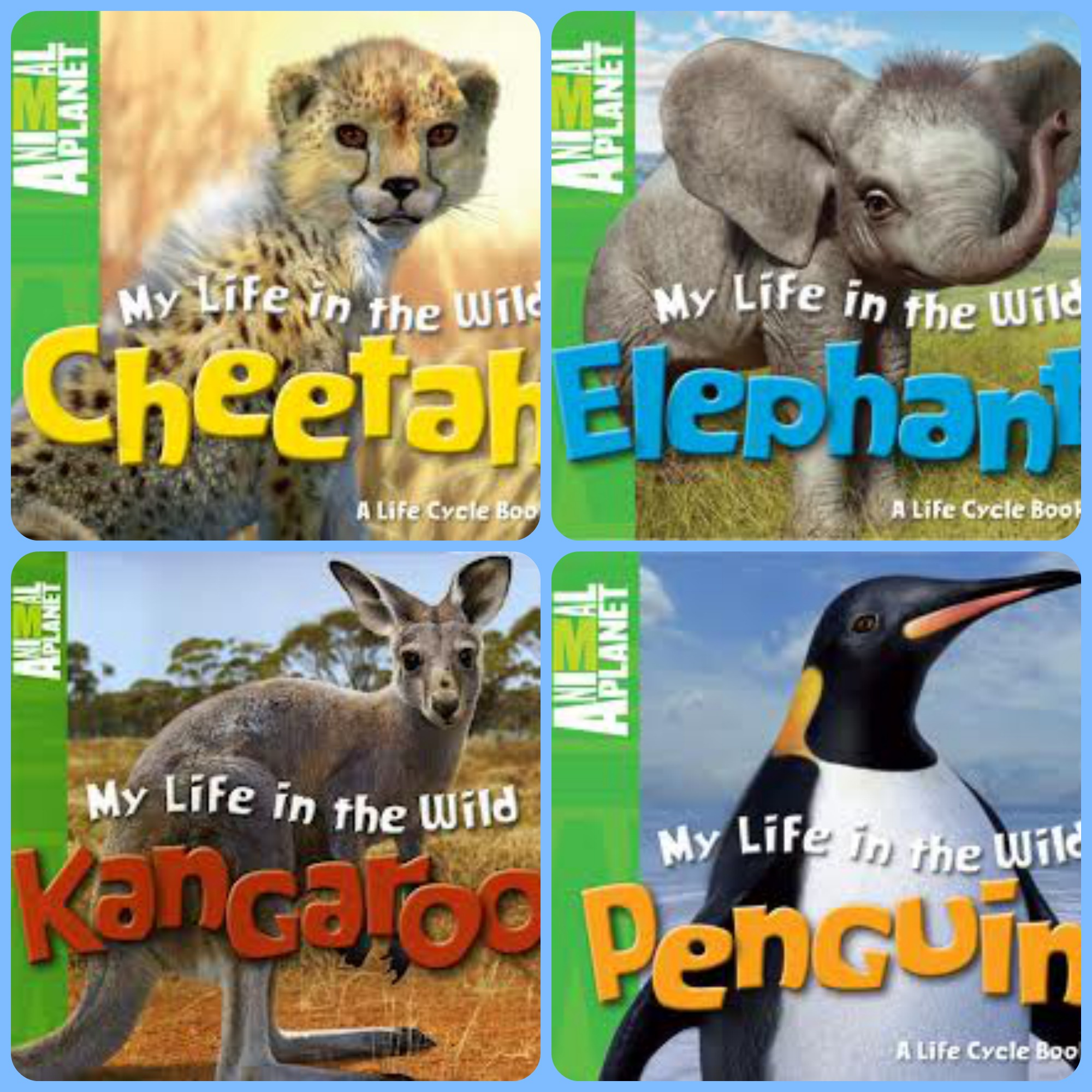 Nonfiction Picture Book Wednesday: Cheetahs, fast as the wind ...