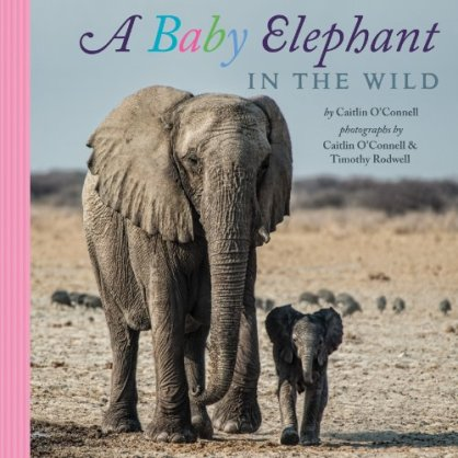 A Baby Elephant in the Wild  #IMWAYR Monday August 11th, 2014 There's a Book for That