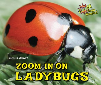 Zoom in on  Lady bugs