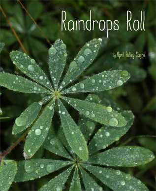 Raindrops Roll  20 favourite nonfiction titles of 2015 There's a Book for That