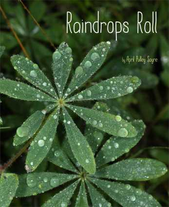 Raindrops Roll Nonfiction Picture Book Wednesday and I've been reading . . .