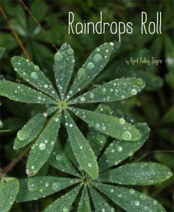 Raindrops Roll Nonfiction Picture Books - grow a beginning collection There's a Book for That