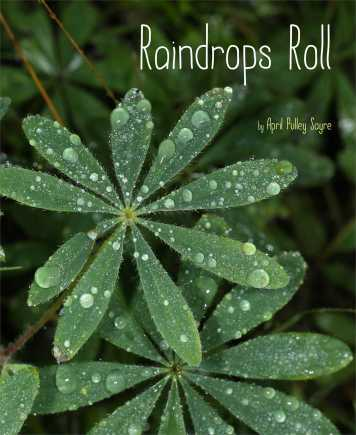Raindrops Roll  Nonfiction Picture Book Dreaming: Spring 2015 There's a Book for That