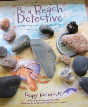 Be a Beach Detective NFPB Wednesday
