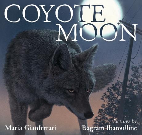 coyote-moon